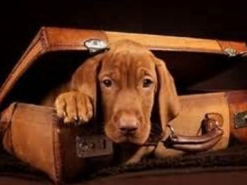 moving-abroad-with-your-dog